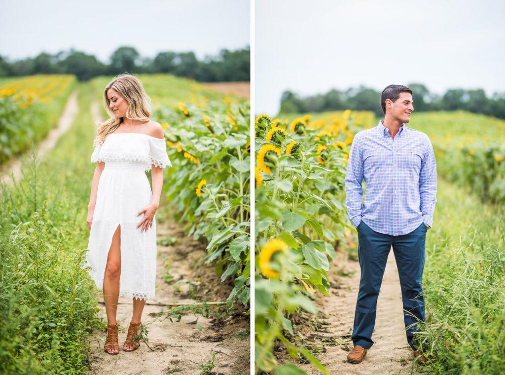 separate portraits romantic engagement sunflower field