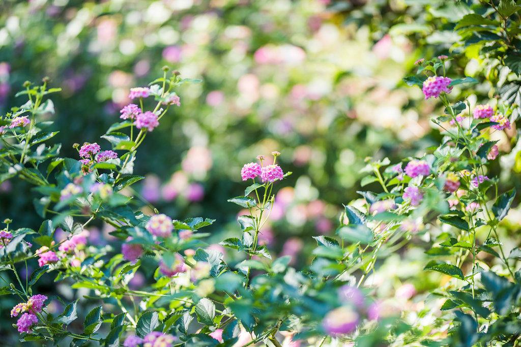 purple flower details Kaitlyn Ferris photography garden wedding